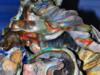 Conchiglia di Herculaneum -2
